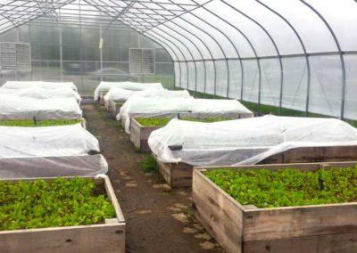 micro farm 1